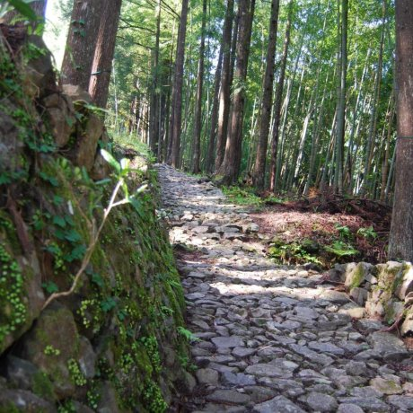 "Kumano Kodo- ""Way of St. James"" di Jepang"